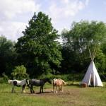 unsere Pferde mit Tipi