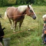 Auf dem Weg in den Wald begrüßen wir die Pferde