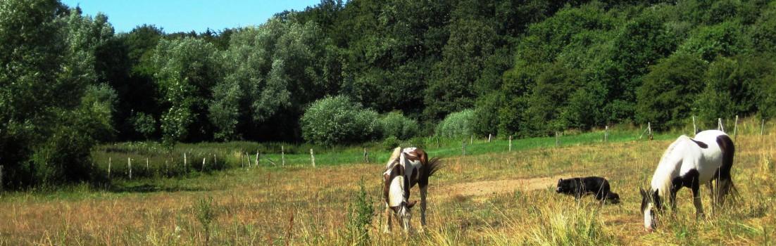 Arbeitspferde auf der Weide